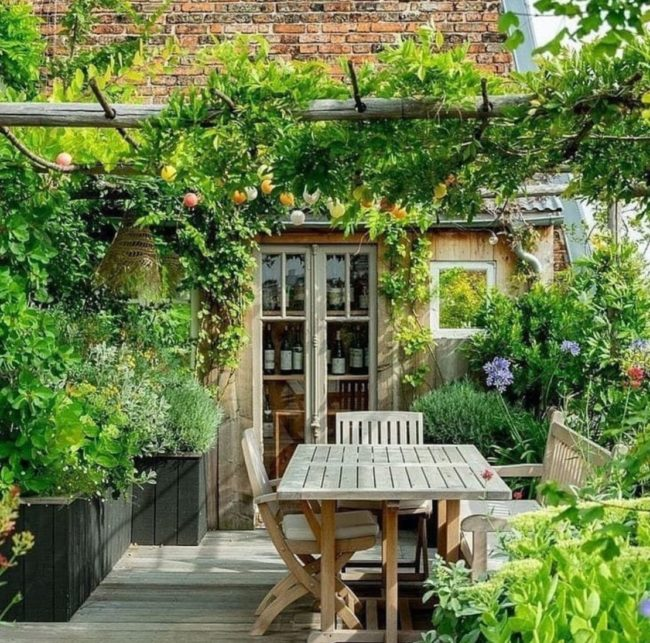 a pergola covered with a fruit vine, growing over a wooden table on a deck