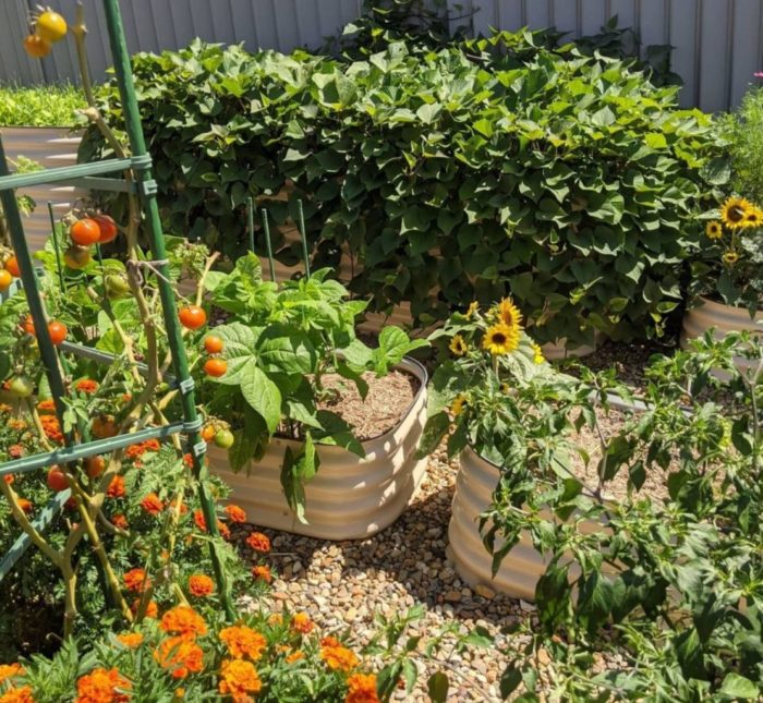 a rustic vegetable garden with flowers and crops