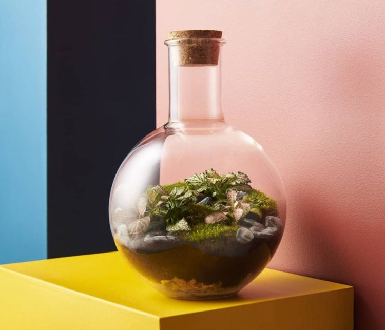a large glass bottle shaped like a scientific boiling flask with a bottle garden inside