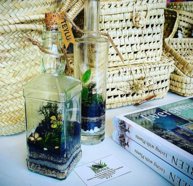 you can grow a bottle garden in recycled spirits bottles, like these