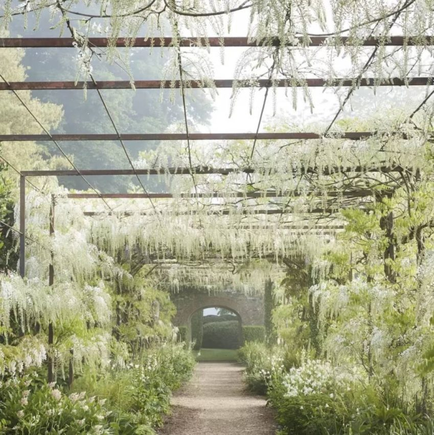 a long pergola archway covered loosely in white wisteria flowers