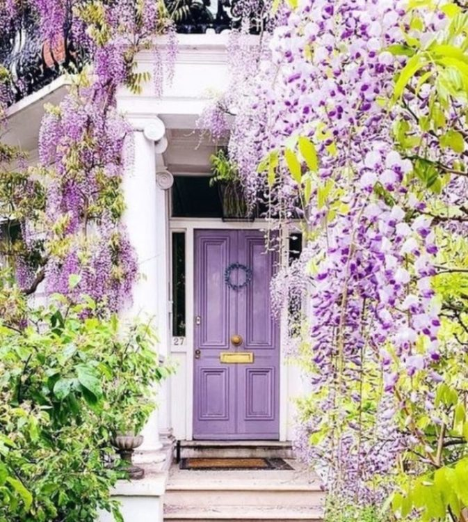 an elegant doorway, where the front door is painted the same colour as the purple wisteria flowers in the foreground