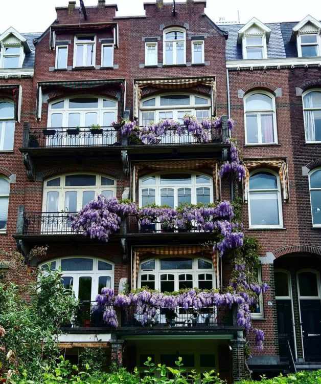 a townhouse in the Netherlands, with wisteria covering a balcony at every level