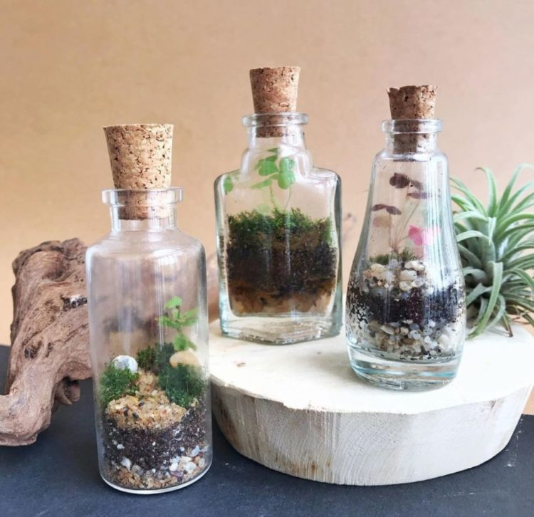 three small glass bottles have tiny plants growing inside