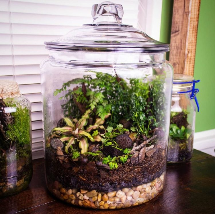 a large glass jar with a sealed lid, filled with a collection of tiny, scaled-down plants
