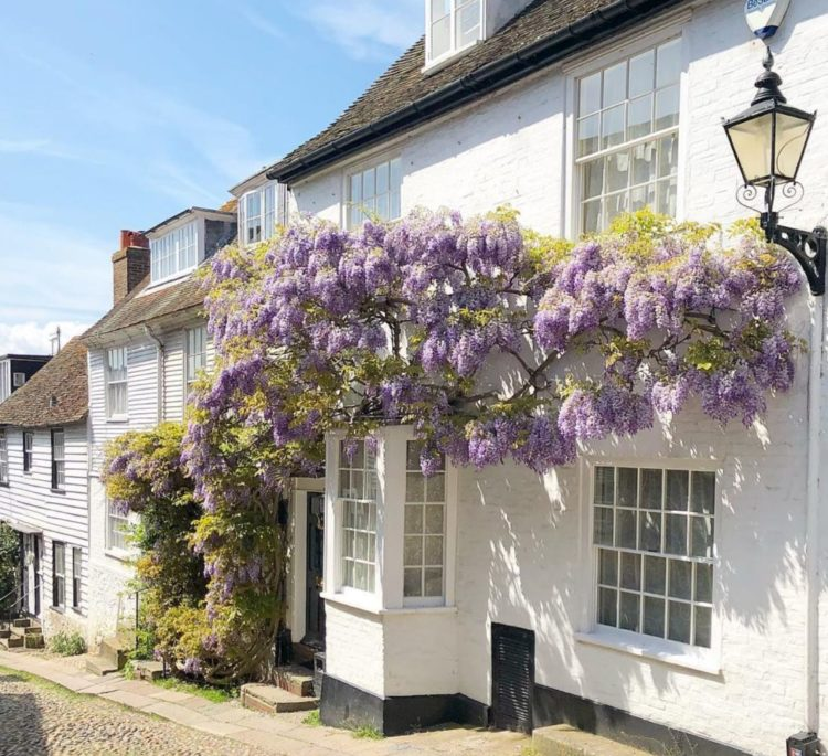 a historic building on a cobbled high-street, covered in wisteria
