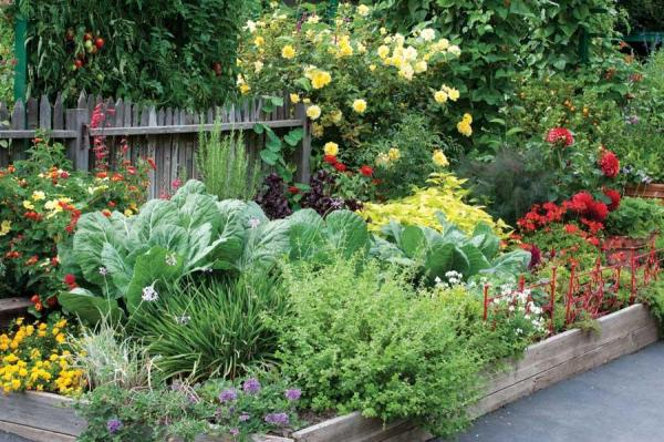 a garden bed packed with edible plants in various colours and shapes