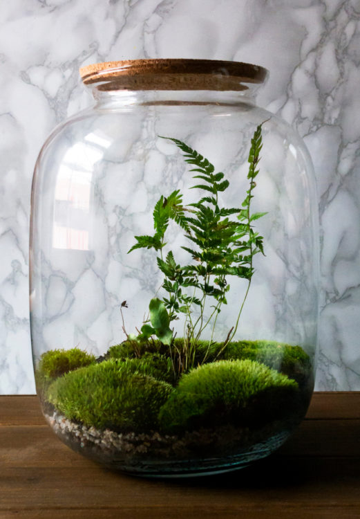 a simple glass jar with a single fern sprig surrounded by low mounds of moss