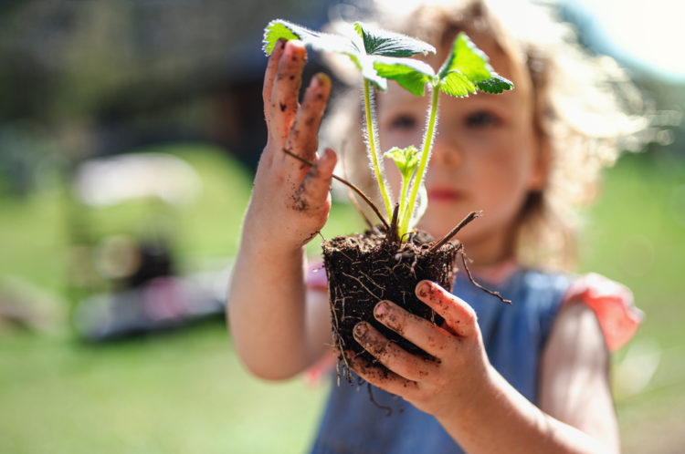 a small girl holding out a strawberry plant, one of the best plants to grow with kids