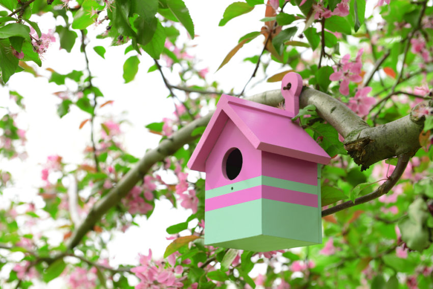 a small bird box painted pink and mint green, hanging from a tree in a bird friendly garden