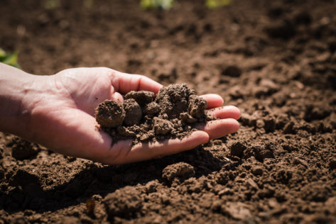 close-up of a hand holding earth - how to improve your garden soil