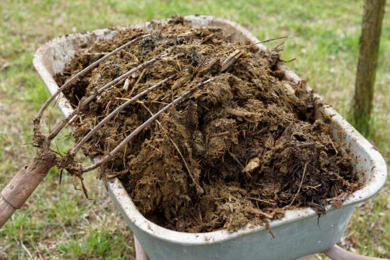 a wheelbarrow full of well-rotted animal manure to improve garden soil
