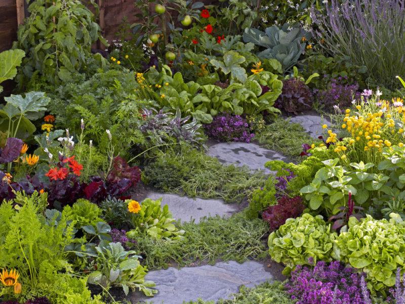 stepping stones through a leafy edible garden