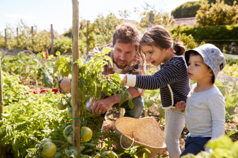 a father and two children looking closely at a tomato vine in a vegetable patch