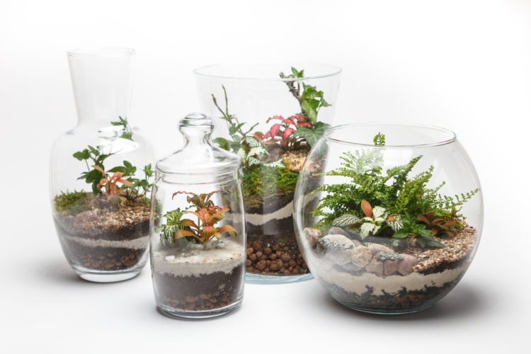 four glass tumblers and jars of different shapes, with miniature gardens inside