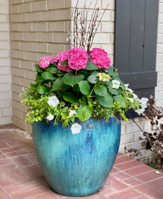 a set of bright pink flowers contrasts against the bright blue planter they're growing in