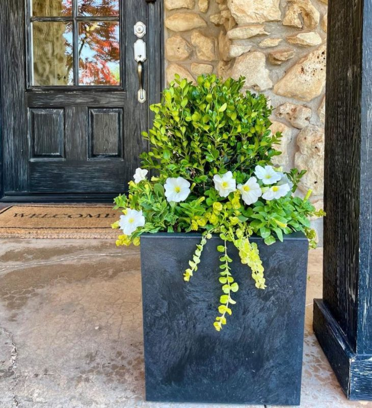 a modern black planter with a shrub surrounded by flowers and trailing plants