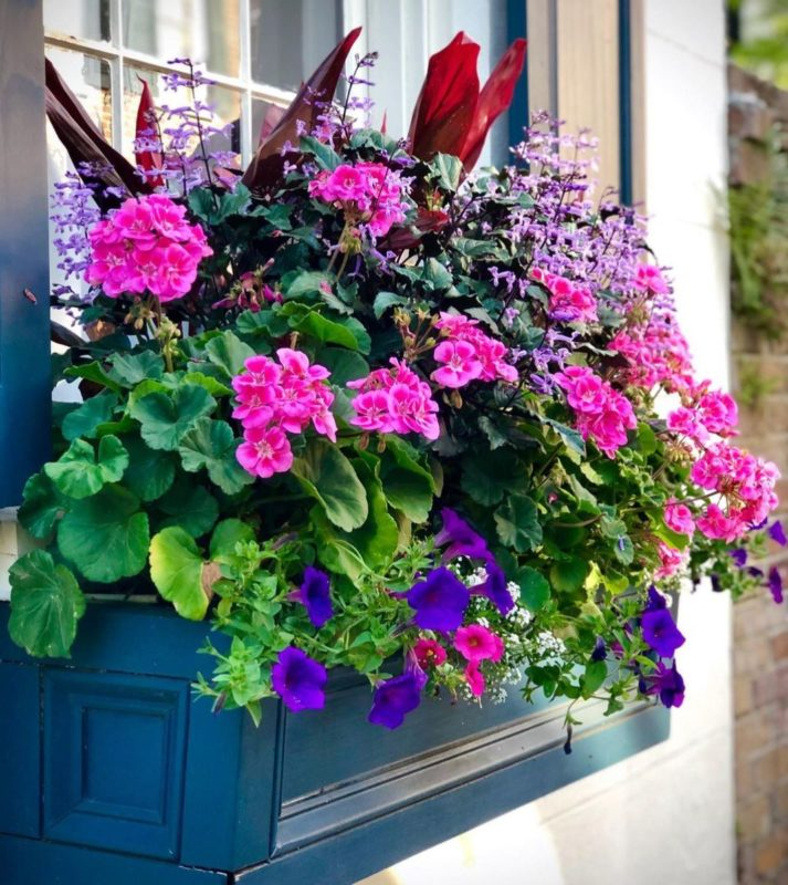 a wooden window box filled with pink and purple flowers, spilling over the edge