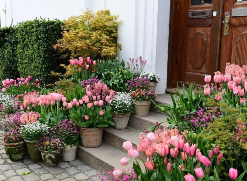 small and medium pots filled with pale pink flowers create a container garden on a front doorstep