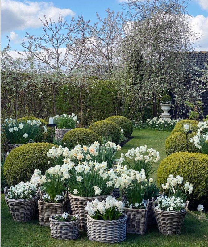 about twenty baskets and pots are filled with matching white tulips, daffodils and other flowers grouped together
