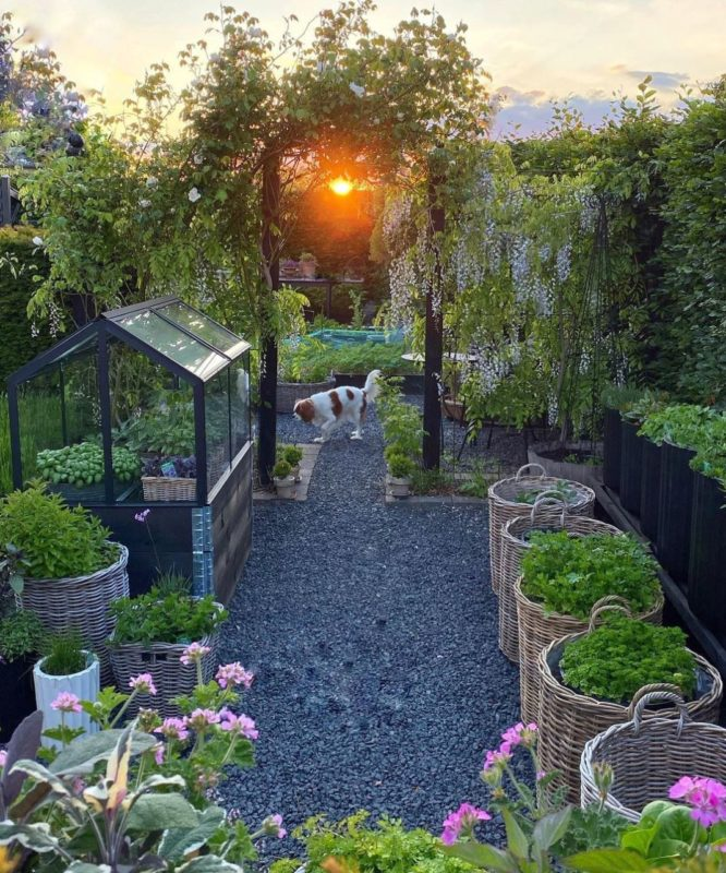 a gravelled garden with raised vegetable beds and large wicker baskets with shrubs and herbs planted inside