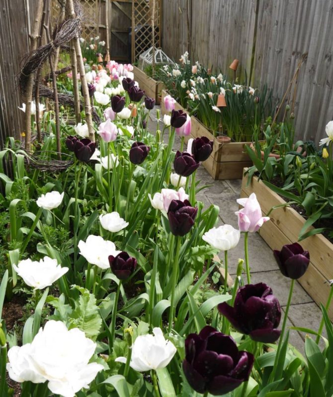 narrow containers filled with white and purple tulips line the edges of a side return