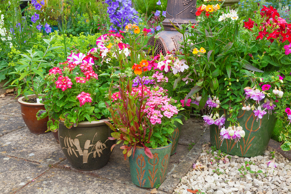 a collection of pots filled with the best plants for container gardening