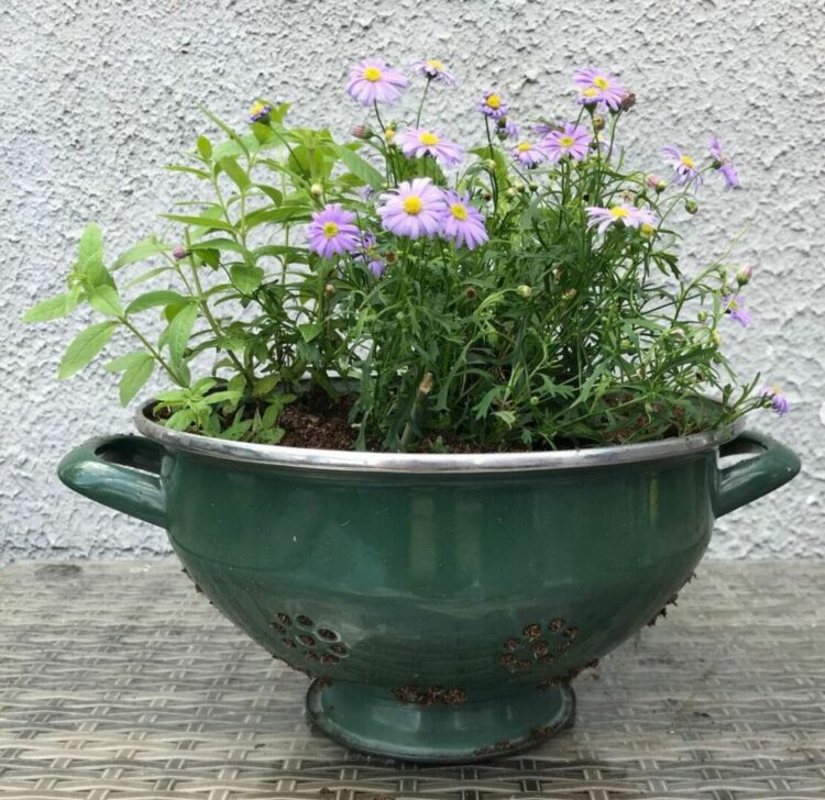 an attractive colander is a great way to use upcycled garden ideas in your garden