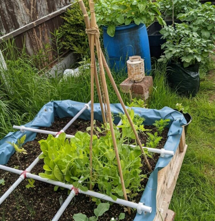 a lined planter with vegetables grown using square foot gardening methods