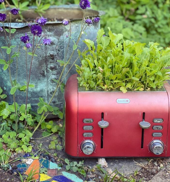 a trendy red toaster is now housing herbs outside