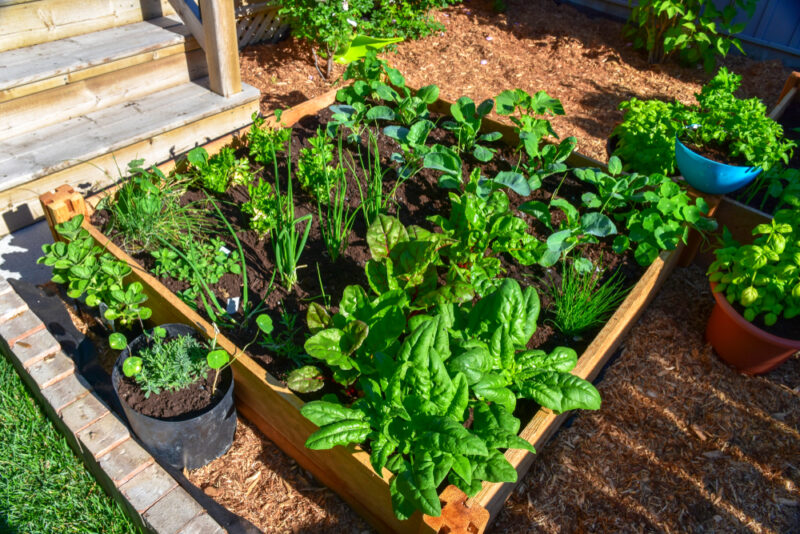 a raised vegetable bed for intensive crop growing