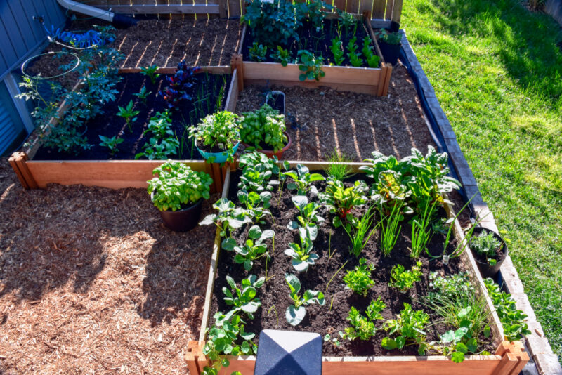 a large vegetable patch in a garden, using square foot gardening methods