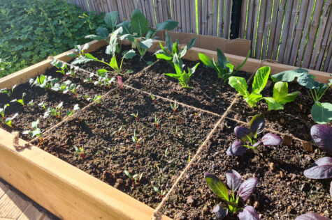 square foot gardening methods mean you can grow more crops in a small space