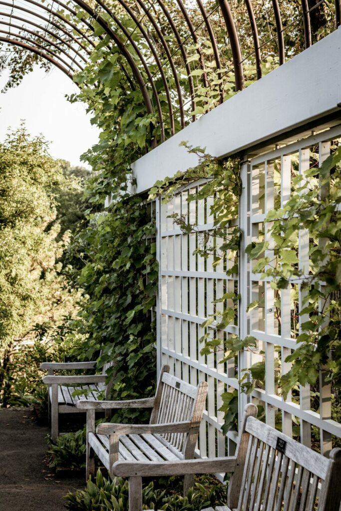 15 Smart Ways to Use a Trellis in Your Garden 1