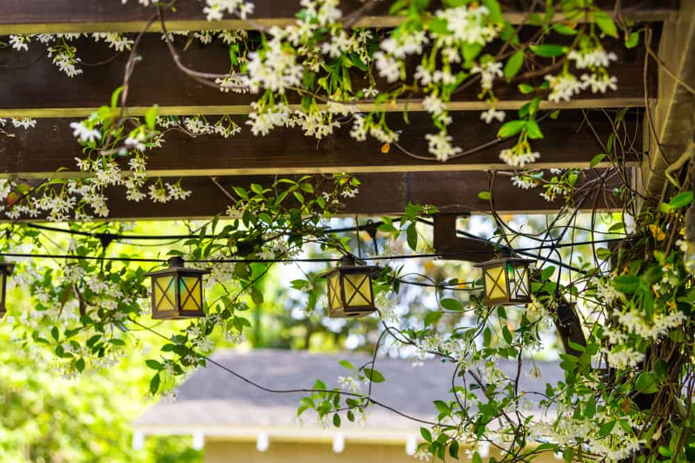 Patio outdoor spring white flower garden in backyard porch of home with lamps light bulbs on pergola canopy wooden gazebo