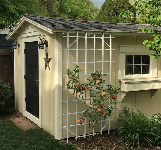 Trellis on a shed