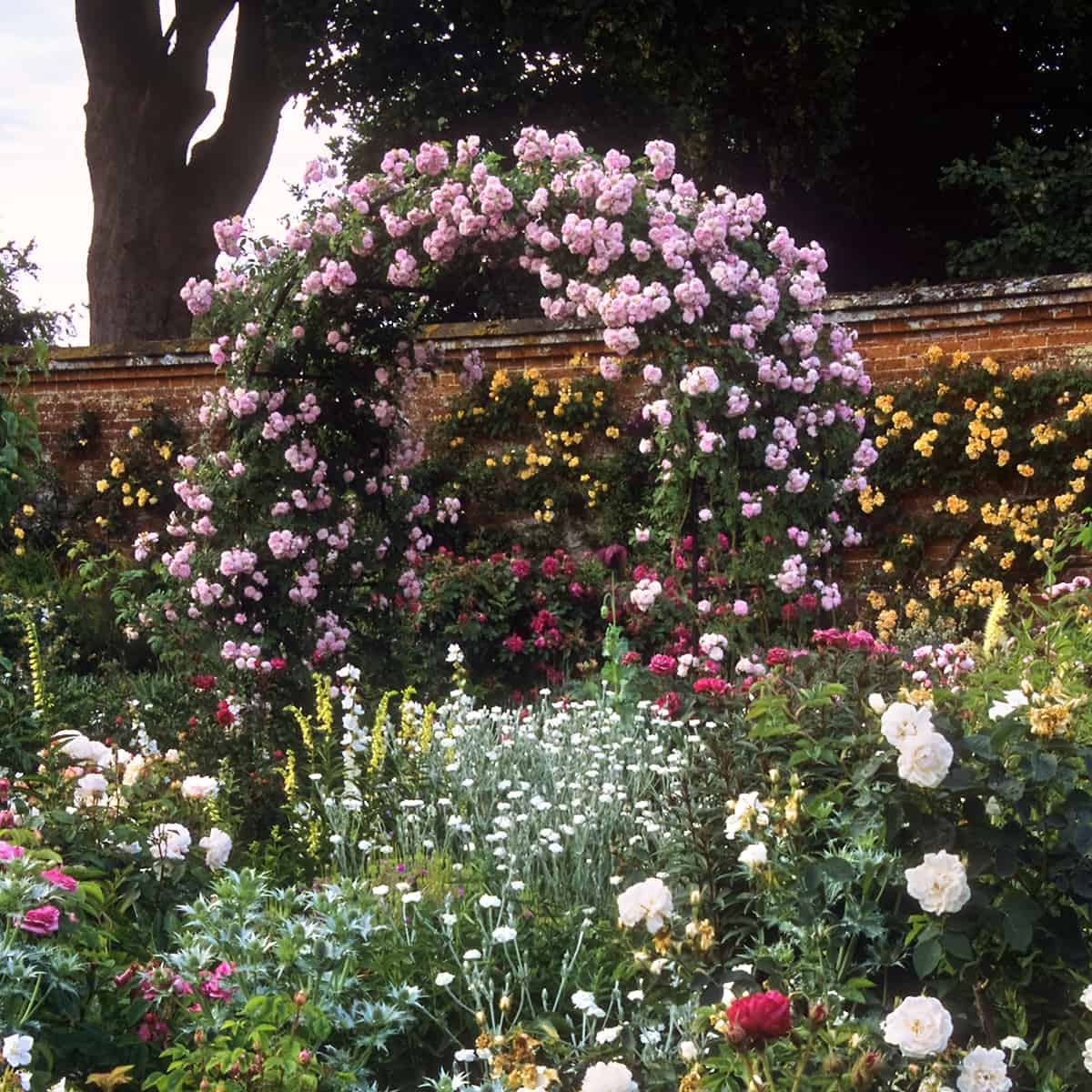 romantic rose garden trellis