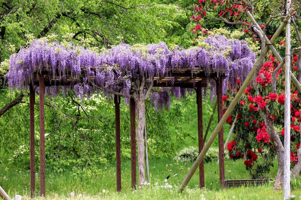 trellis in a japanese botanical garden