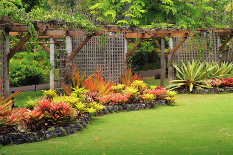 Tropical garden with flowering plants and green lawn with large trellises