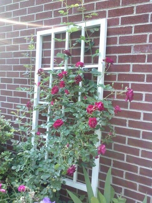 Repurposed Window Frame Trellis
