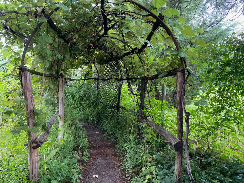 wooden trellis for grapes