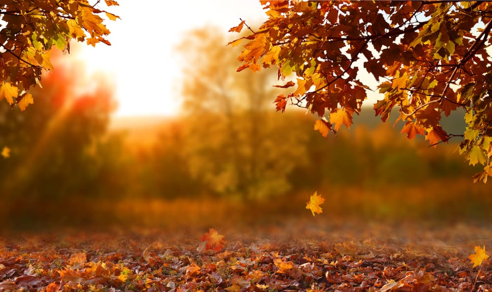 beautiful autumn landscape with yellow trees and sun