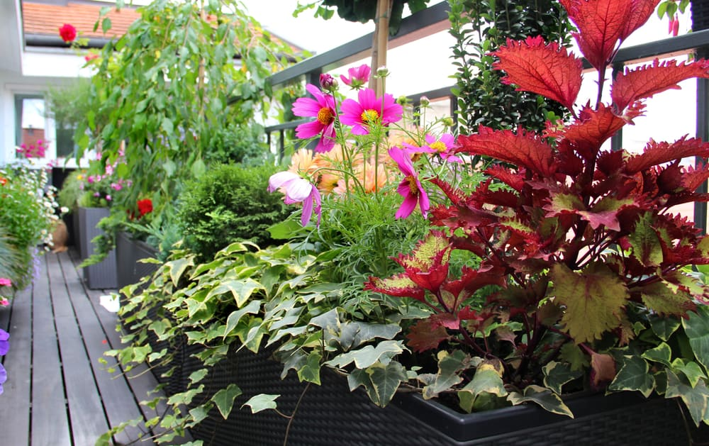 container gardening terrace