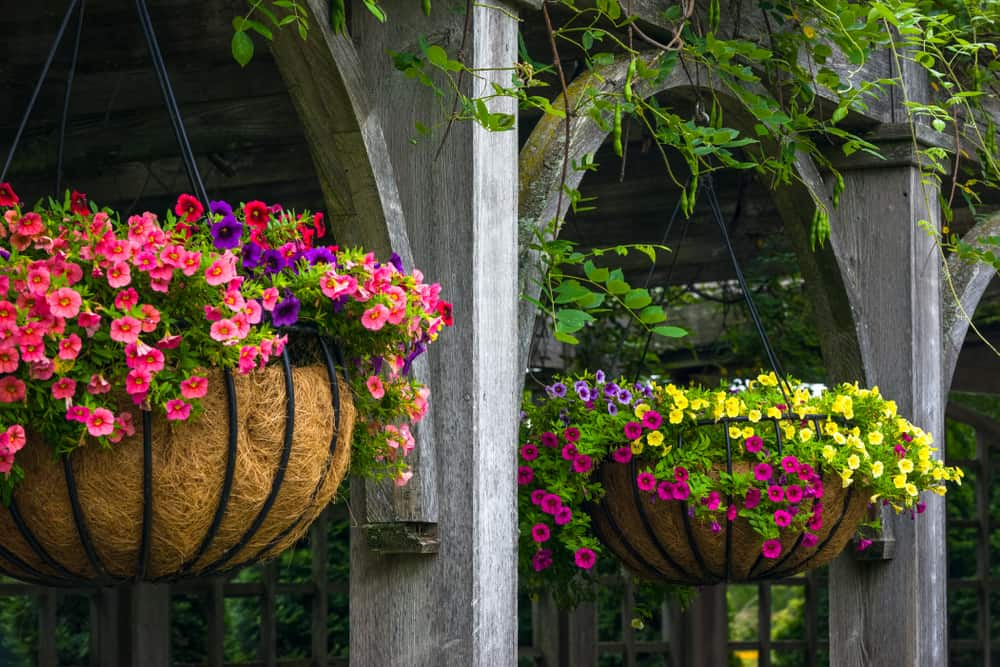 hanging baskets filled with flowering annuals