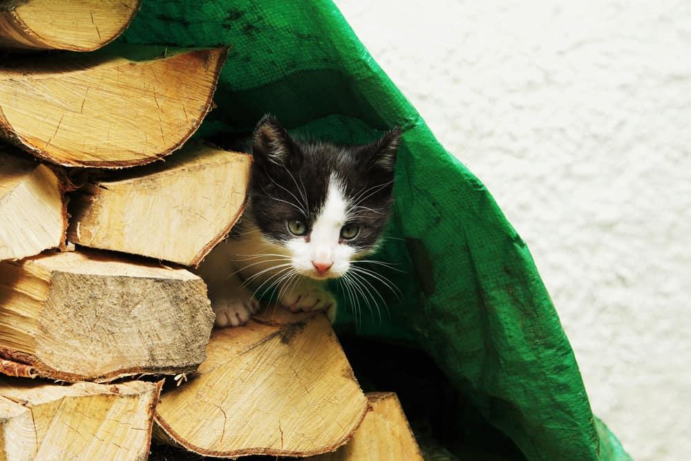 kitten under tarpaulin