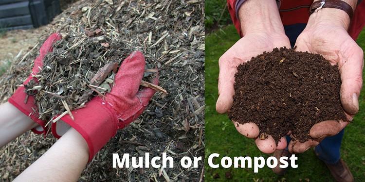 mulch vs compost