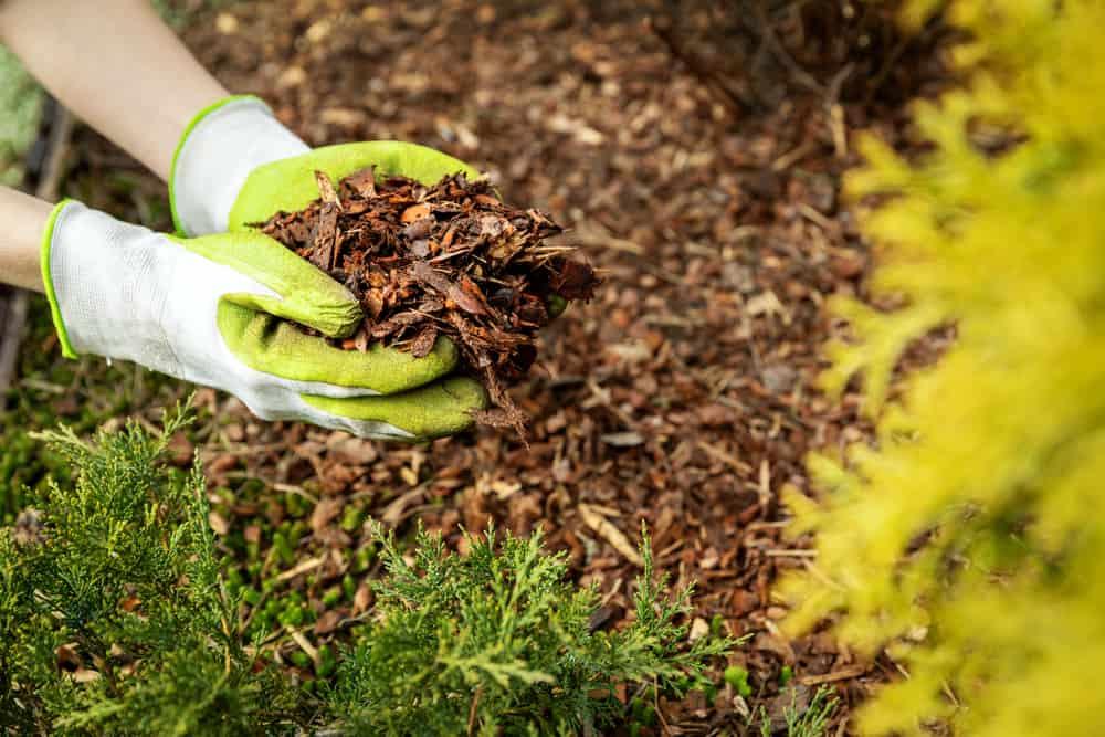 pine tree bark mulch