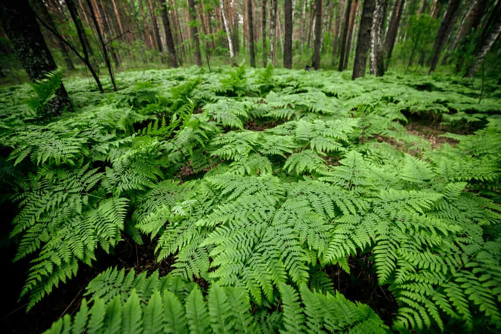 scenic fern forest