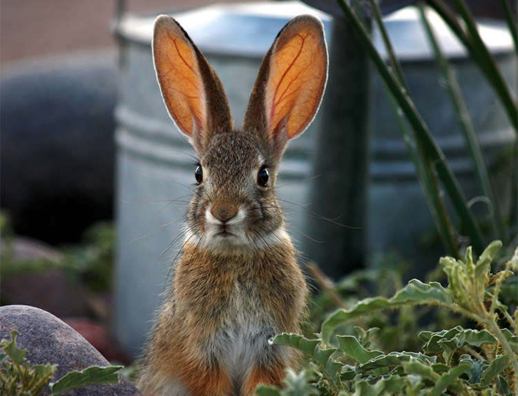 stop bunnies from chewing on garden furniture