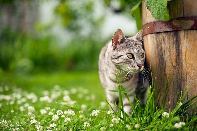 stop cats from spraying on garden furniture